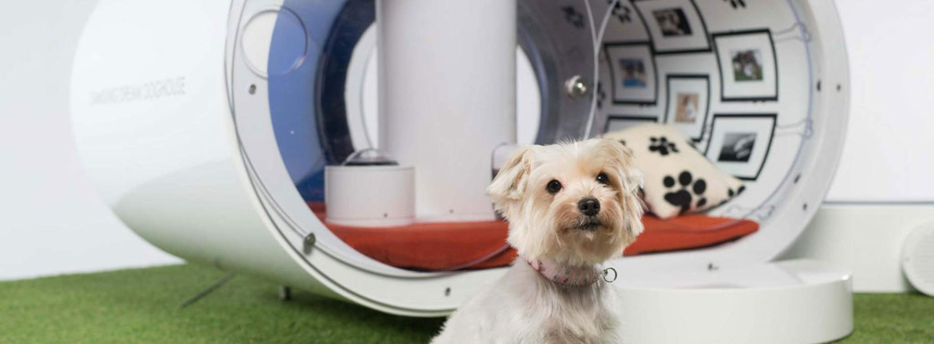 Dream Doghouse: La casa de Samsung para perros
